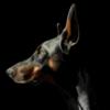 MoniqueLap's avatar