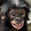 Monkeydigs's avatar