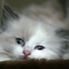 moongaze84's avatar
