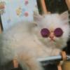 moonpups's avatar