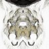 Moonwolf2O's avatar