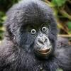 mrmagicgorilla's avatar
