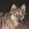 MrMagnusBorrimere's avatar