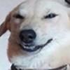 mrpersinguy's avatar