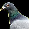 MrRAnts's avatar