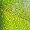 mruzkaa's avatar