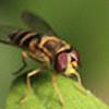 mrvile7734's avatar