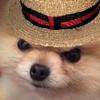 MrWouwou's avatar