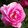 mtumer's avatar