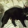 Muireannpendrgon's avatar