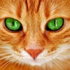 Murchaches's avatar