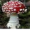 Mushroom-Dancer's avatar