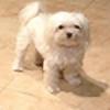 musicalSims's avatar