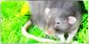Must-Love-Rats's avatar