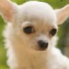 MWRoach's avatar