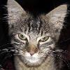 MyChemKitty101's avatar