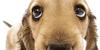 mydoggy's avatar