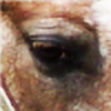 mylittleblackdog's avatar