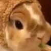 mynx-e's avatar