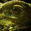 Mysegoliah's avatar