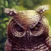 n-a-S-t-u's avatar