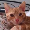 Nachetegr's avatar