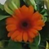 nadda1984's avatar