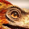 Nadrax3343's avatar