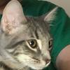 NaffieWaffie's avatar