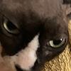 Naienne's avatar