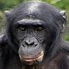 Nailleha's avatar