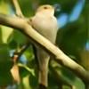NakiBird's avatar