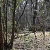 Nalouri's avatar