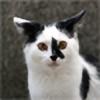 Nashdash-oh's avatar
