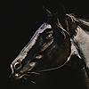NatalieRyan's avatar