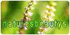 NaturesBeautys's avatar