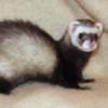 Navyila's avatar