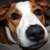 ndemery's avatar