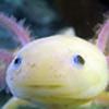 NeagyanVShironoa's avatar
