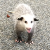 Nearlydedicated's avatar