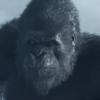 NeckOfSteel's avatar
