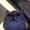 Nehap's avatar