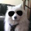 Neowolfsp's avatar