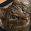 NeptuneHamster's avatar