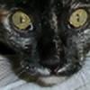 Nerialka's avatar