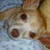 NessyRosy's avatar