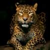 neto5326's avatar