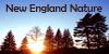 NewEngland-Nature's avatar