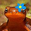 newt-onix's avatar
