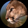 newtonianflow's avatar